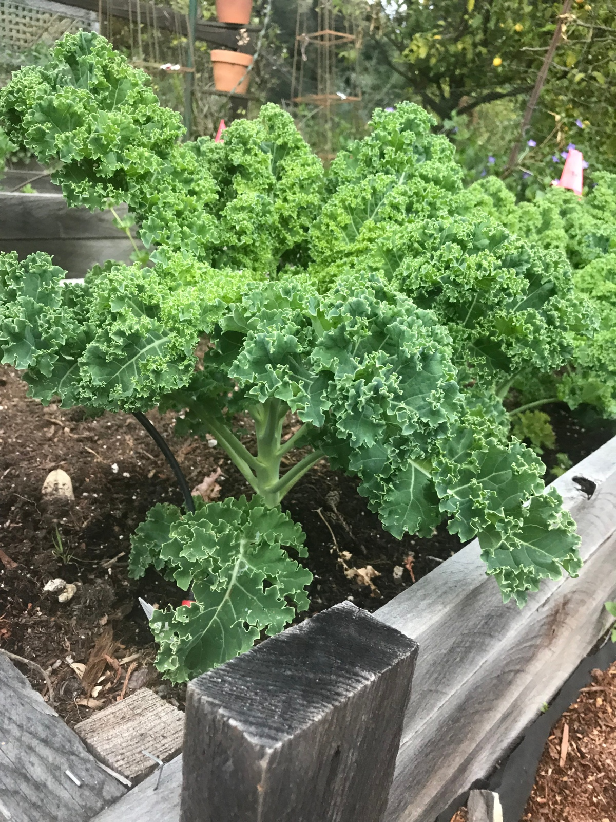 Our Vegetable Garden 2019